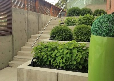 New concrete stairs with plants