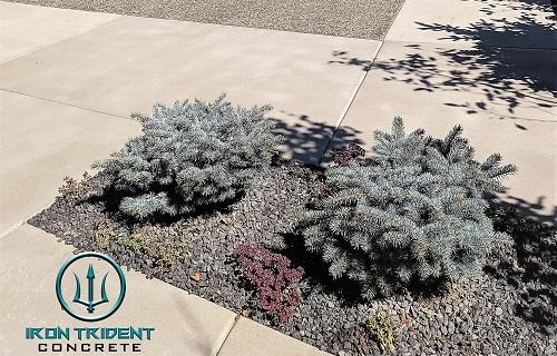 Plants in Between Concrete